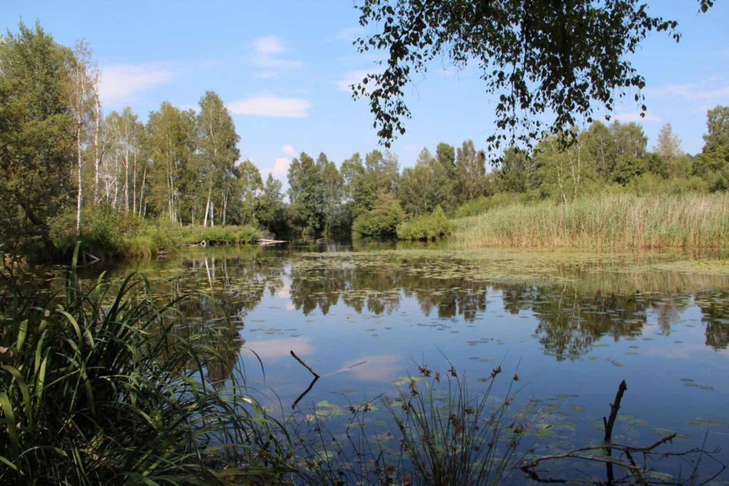 Moor-Erlebnispfad Pfrunger-Burgweiler Ried