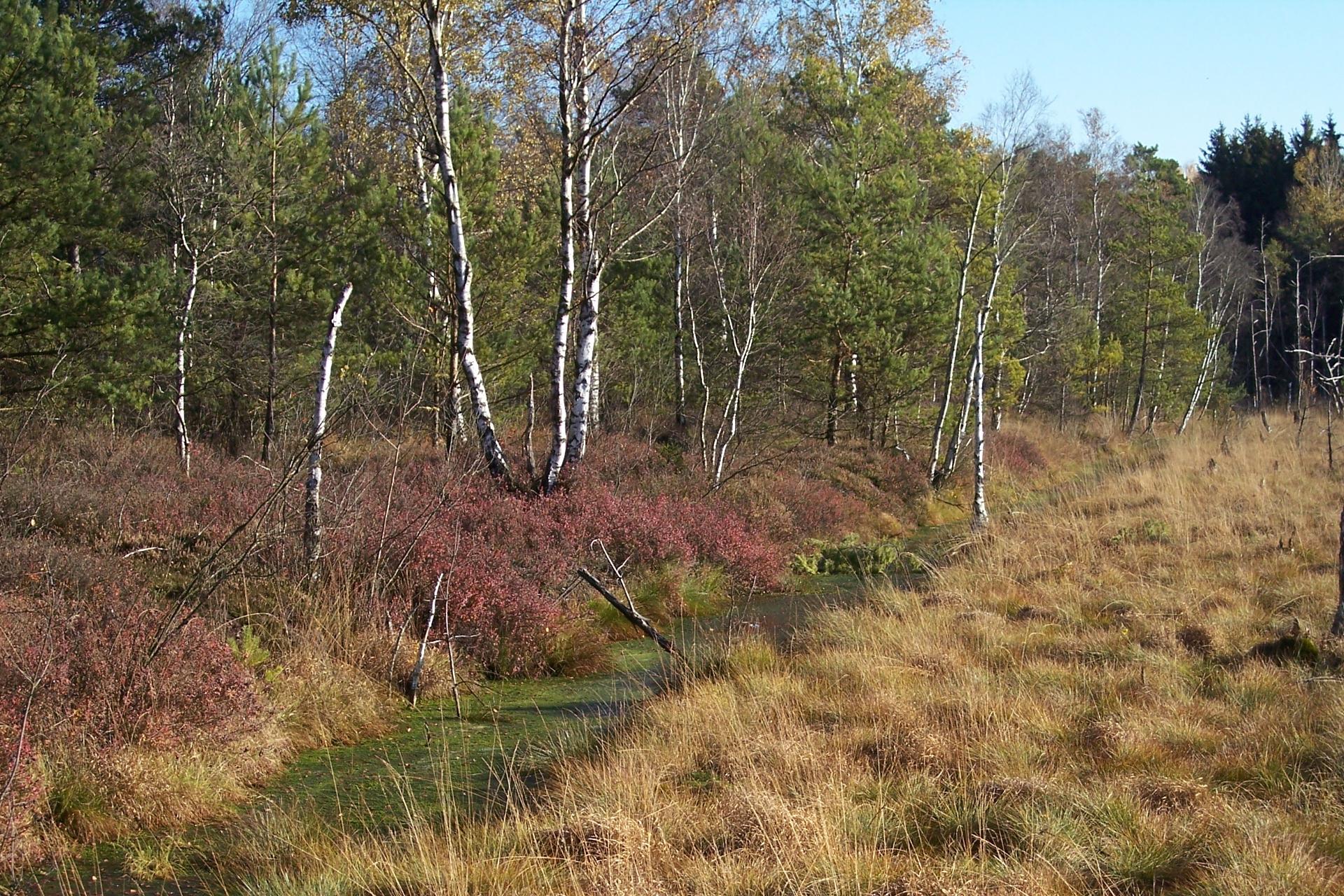 Herbst im Wurzacher Ried